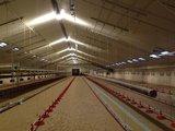 LED kippenstal verlichting multi-hoek