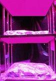 LED led groeilamp kweeklamp groeilicht paneel stekken kweeklamp
